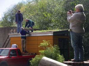 NW Stream Center volunteer Larry Gearheard, center, picks up a piece of the new green roof on the gatehouse at the center in McCollum Park in Everett. Photo by Mark Mulligan of the Everett Herald.