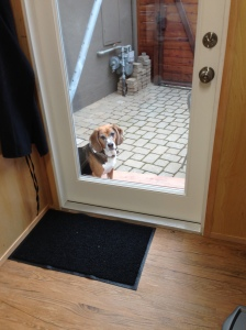 Boomer, a beagle basset hound, enjoys watching Marianne work in her Modern-Shed.