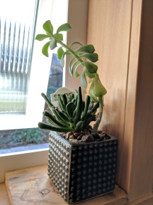 Marc and Jeanine add cozy comforts like real plants to brighten up the space